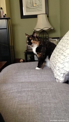 Sun, Dec 18th, 2016 Lost Female Cat - Tommy Murphy Park, Graiguecullen, Carlow
