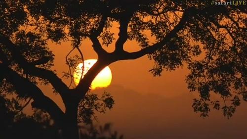 djuma sky sunrise trees dawn mist fog southafrica sun summer nationalgeographic krugernationalpark kruger