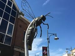 Watford Hornet