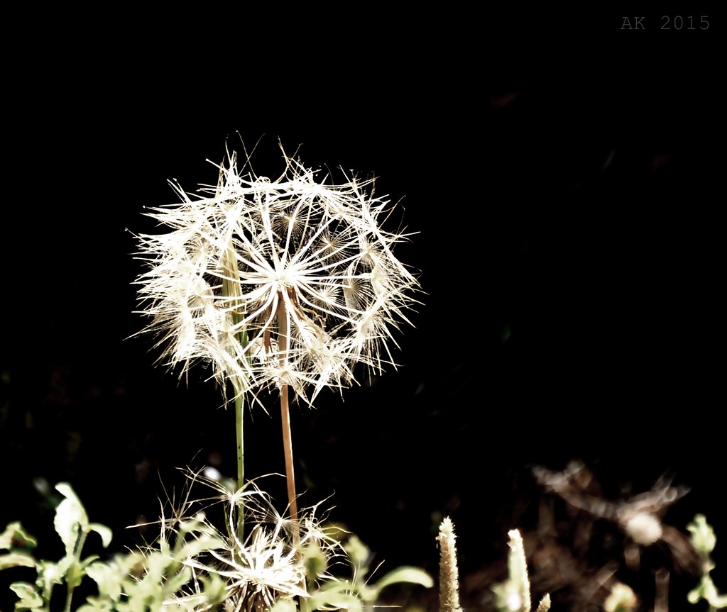 Thassos-Flowers Thassos