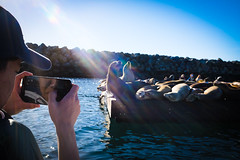 321 - Sea Lions from the Pedal Boat