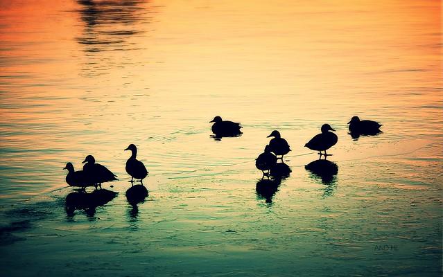 sur le canal gelé ils se chauffent aux derniers rayons de soleil!