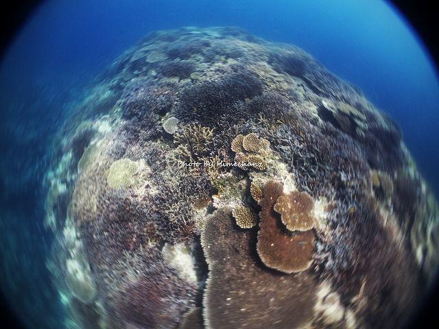 石西礁湖のサンゴはすごい!