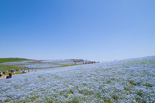 Hitachi Seaside Park 6