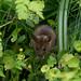 Park mouse by RSPatton