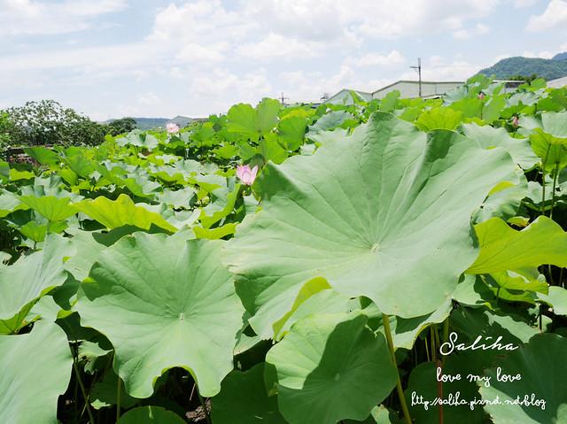 三峽蓮花景點 (6)