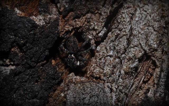 dark bark jumper