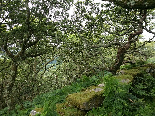 Beautiful Dewerstone Wood