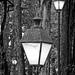 Forest of light por Blas Torillo