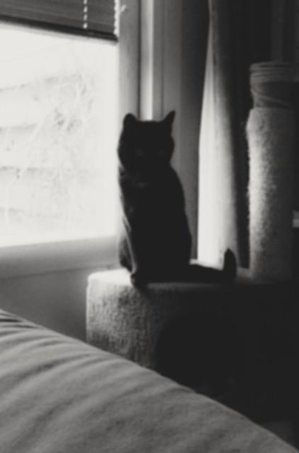 Header of le chat noir