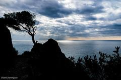 Presqu'île de Giens 6 janvier 2017