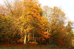 Chopwell Woods in the autumn