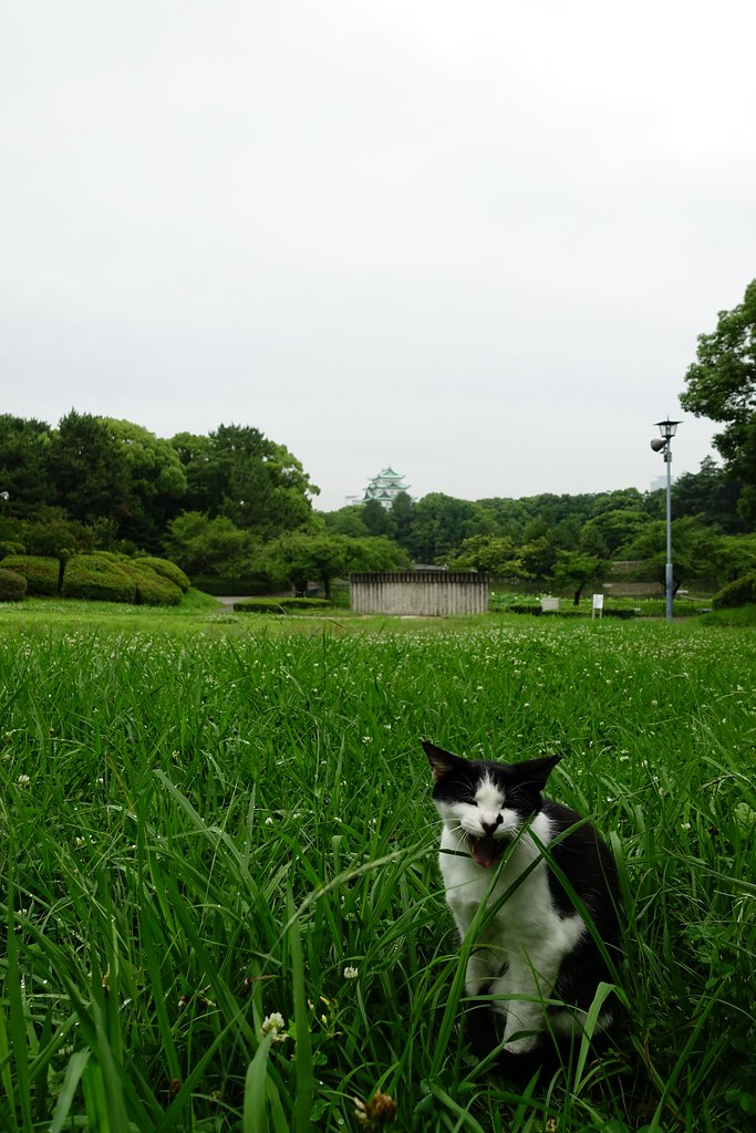 A cat in Mejo park 2015/07 No.2.