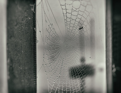 Web in the Fog