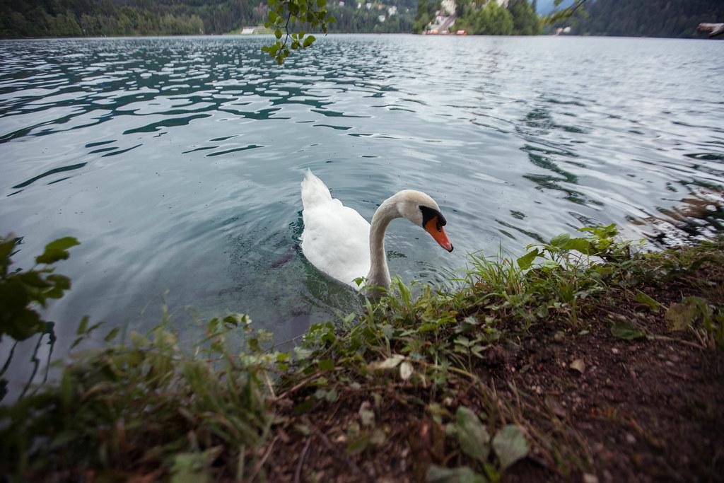 Lake Bled, Slovenia (7/26/15)