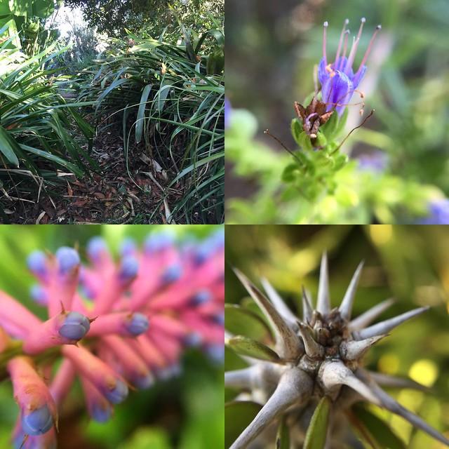 Jonathan's Garden 3