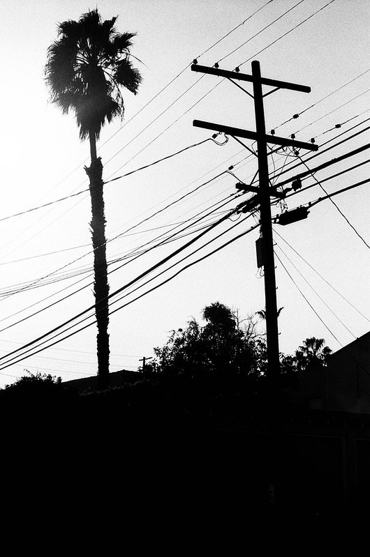 Tree & Telephone Pole, West LA
