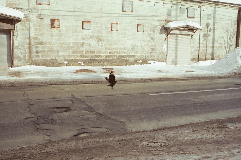小樽 Otaru 北海道 / Fujifilm 500D 8592 / Nikon FM2 拍到一隻烏鴉在馬路上起飛。  那時候牠停在馬路上有點久,我想起一路上旅行時拍的烏鴉角度都怪怪的,希望這次可以拍到好一點的畫面!  結果我拍到了!  Nikon FM2 Nikon AI AF Nikkor 35mm F/2D Fujifilm 500D 8592 1119-0007 2016/02/02 Photo by Toomore