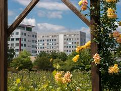 Vineyard in Berlin