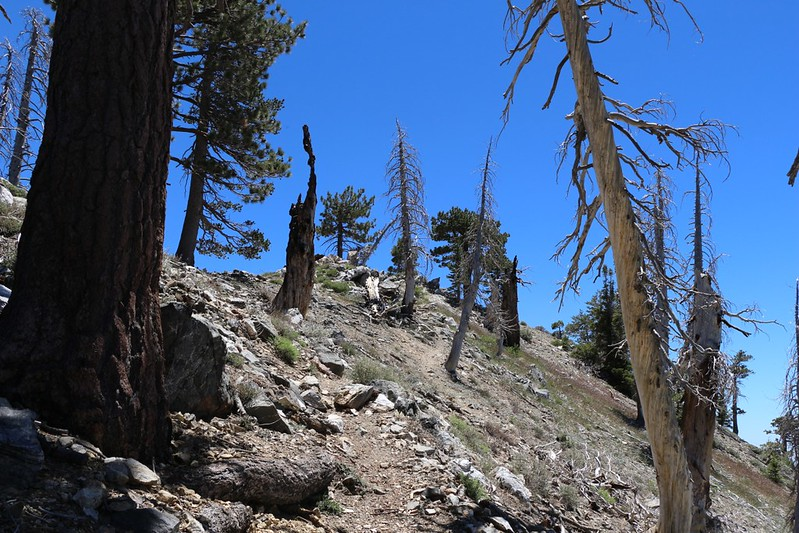 Hiking the use trail up to the summit of Mount Hawkins (elevation 8850 feet)