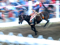 horse racing(0.0), english riding(0.0), eventing(0.0), jockey(0.0), animal sports(1.0), rodeo(1.0), equestrianism(1.0), western riding(1.0), racing(1.0), stallion(1.0), equestrian sport(1.0), sports(1.0), western pleasure(1.0), reining(1.0), horse(1.0), horse harness(1.0), barrel racing(1.0),