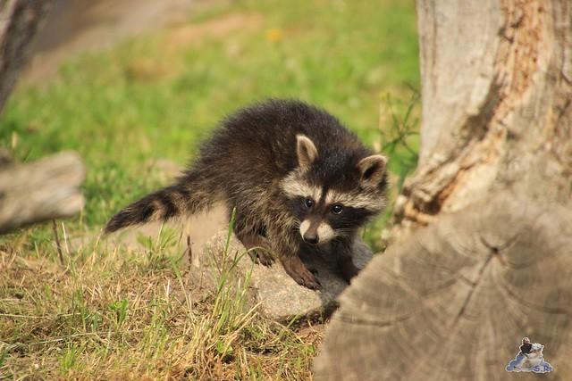 Tierpark Krüzen 03.07.2015  8