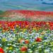 Colors of summer by (Elio Ausili)