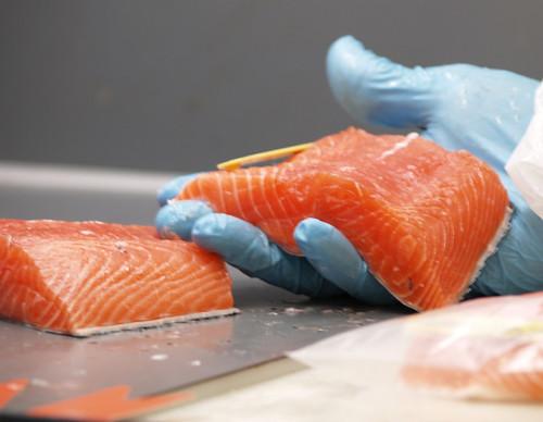 鮭魚處理過程。攝影:Peter Whyte。圖片來源:CSIRO(CC BY 3.0)