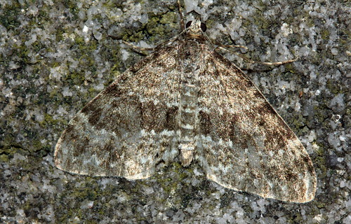 Grey Mountain Carpet 0814