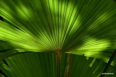 my natural palm garden