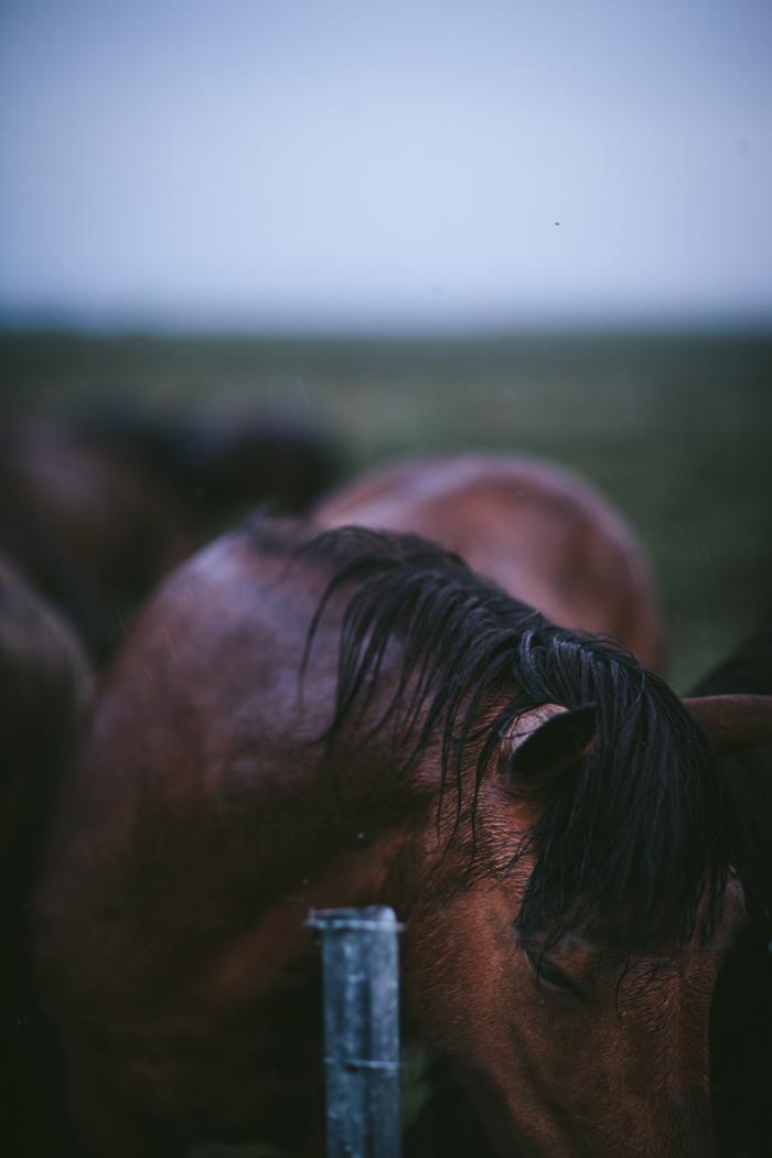 Iceland by Eva Kosmas Flores