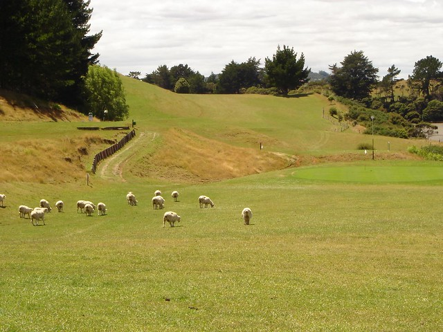 A typical new zealand golf course flickr photo sharing for Landscaping courses nz