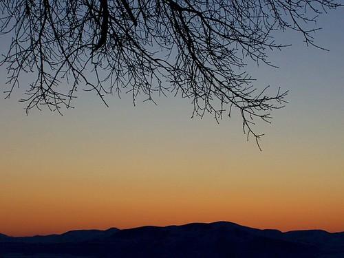 sunset tree utah branches richmond cachevalley