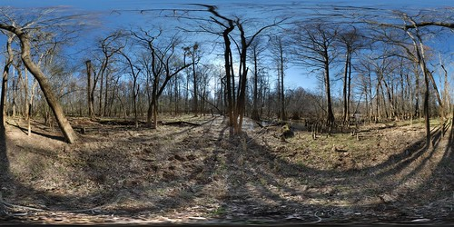 park autostitch tree forest geotagged 360 180 national congaree equirectangular psphere geolat337801 geolon807733