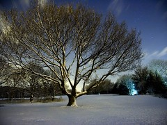 Winter Trees by Night