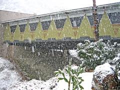Snow (1304)
