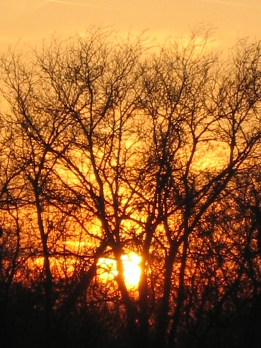 trees sunset texas ferris
