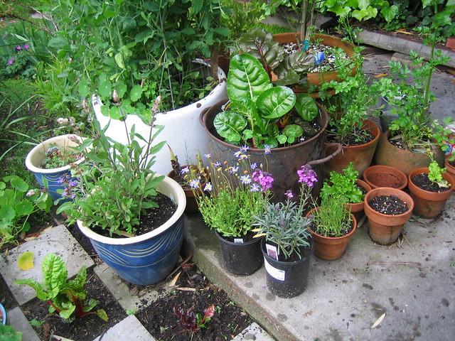 Weed Plants In Backyard : Pot Garden  Flickr  Photo Sharing!