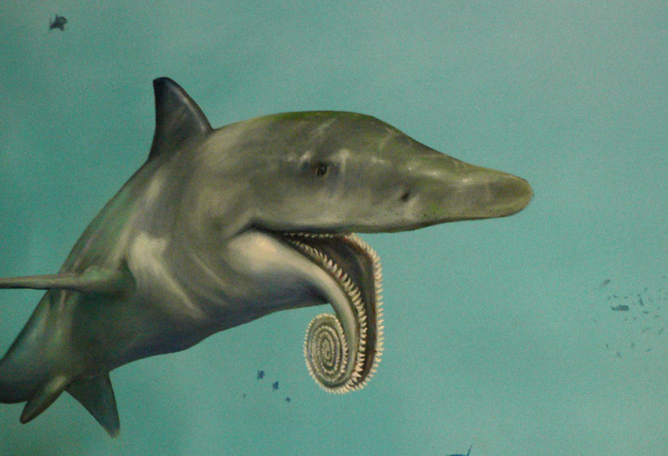 Helicoprion mural at the Las Vegas Natural History Museum ...