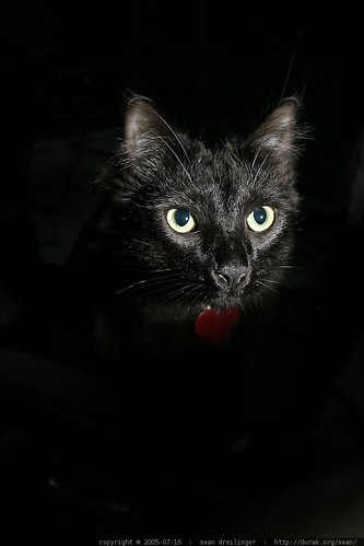 rest in peace   catula, our black cat
