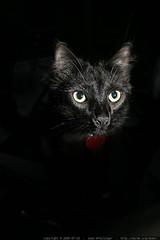 rest in peace   catula, our black cat