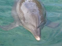 porpoise(0.0), animal(1.0), marine mammal(1.0), common bottlenose dolphin(1.0), marine biology(1.0), short-beaked common dolphin(1.0), fauna(1.0), dolphin(1.0), tucuxi(1.0),