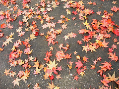 Tea Leaves, Road