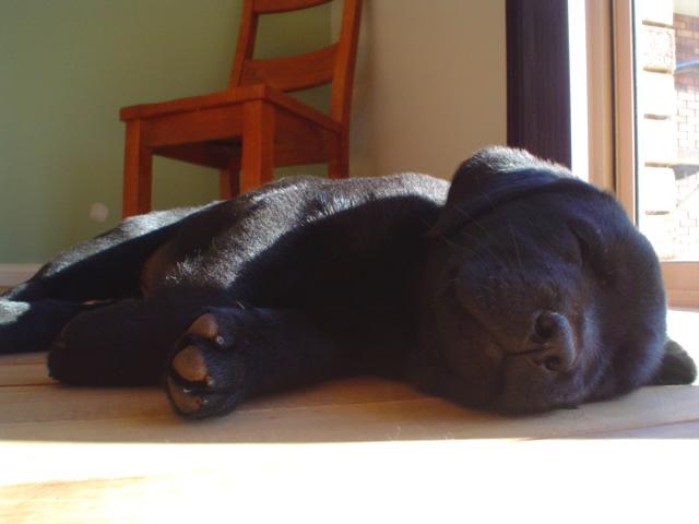 Wainwright S Puppy Food Trays