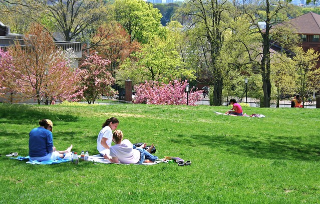 students studying on campus green