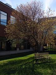 Spring at UPEI