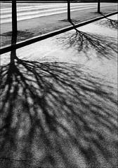 Silhouettes light & shadows