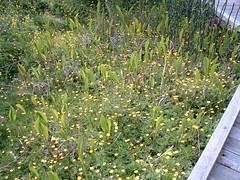 annual plant, shrub, flower, garden, plant, herb, wildflower, flora, meadow,