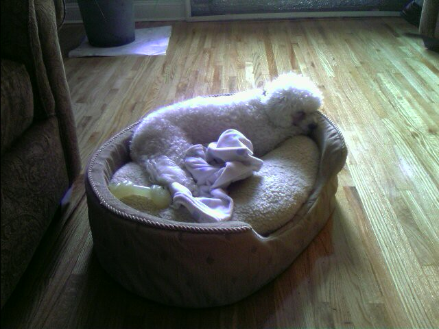 Dog Bed For   Lb Dog
