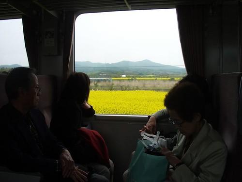 横浜町 菜の花畑